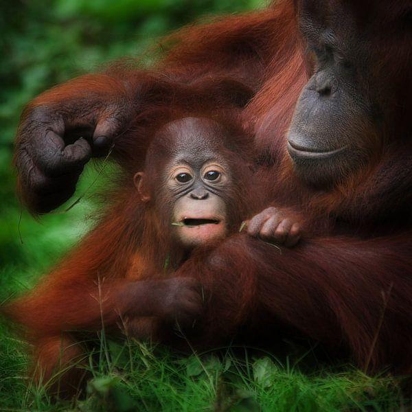 Moeder en kind Orang-oetan van Ruud Peters