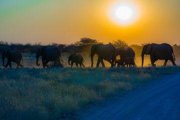 Olifanten tijdens zonsondergang von Ger&Wil van de Bovenkamp