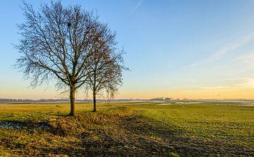 Twee kale bomen in een weids polderlandschap van Ruud Morijn