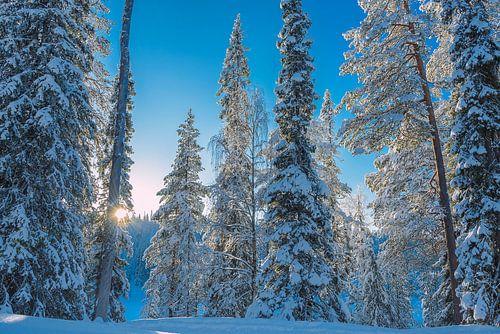 Zonsondergang in besneeuwd bos, Finland