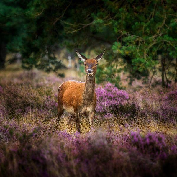 Aware in purple and green van Ruud Peters