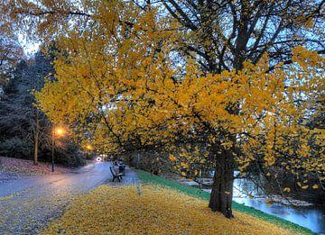 Pad en verkleurde boom in de wallen in de herfst in de schemering, Bremen, Duitsland, Europa van Torsten Krüger