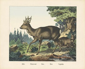 Ree,  firma Joseph Scholz, 1829 - 1880