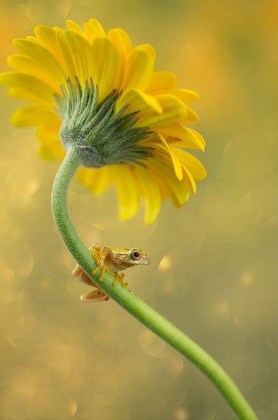 kikker en bloem van hanny bosveld