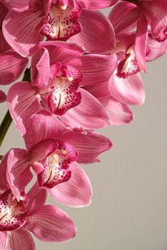 Orchidee von Sigrid Olschinski