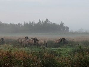 Wilde paarden in de mist van Ine van Kuijk