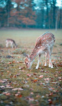 Hirsche grasen in der Natur von Made By Jane