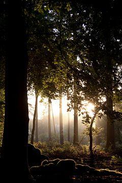 Magischer holländischer Sonnenaufgang 3 von Danielle Kramer