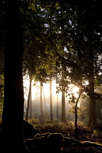 Magische hollandse zonsopgang 3