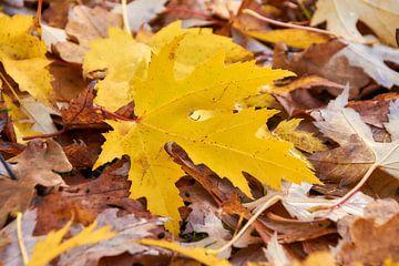 Herfstbladeren van Ad Jekel