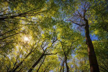 Ein Himmel voller Frühling von Daniela Beyer