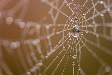 Spinnennetz von Denis Feiner