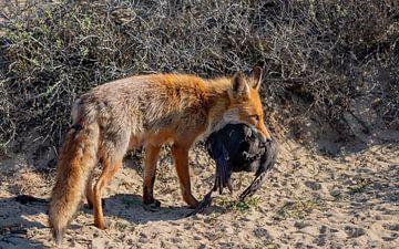 Mutter Fuchs hat gejagt. von Natascha Worseling