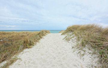 Weg über die Dünen zur Ostsee von Gisela Scheffbuch