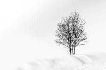 Winter landschap  sur Vandain Fotografie