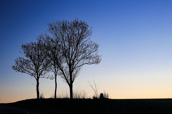 Drie bomen bij zonsopgang.