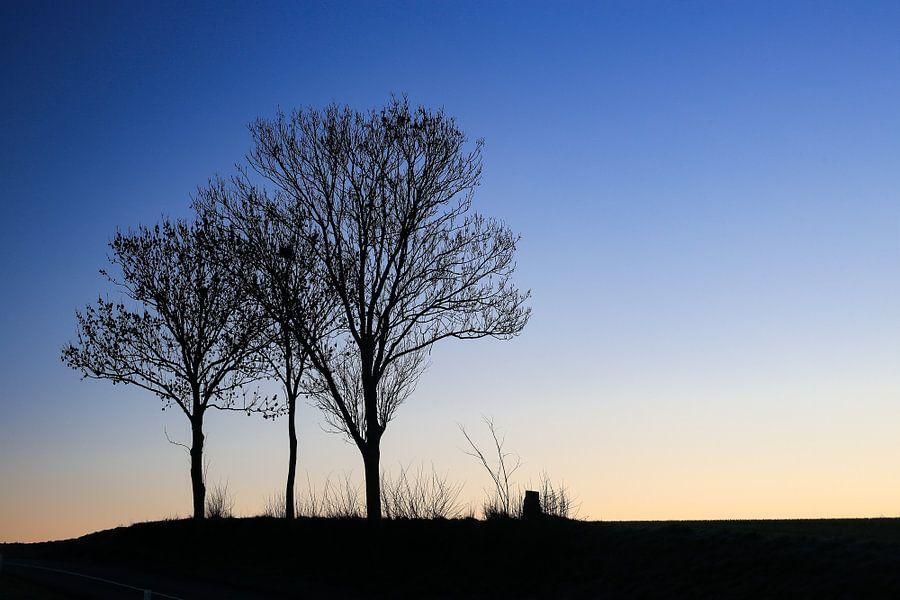 Drie bomen bij zonsopgang. van Ulbe Spaans