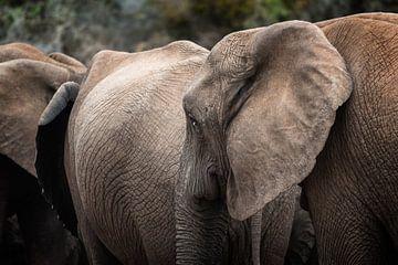 Olifanten sur Trudy van der Werf