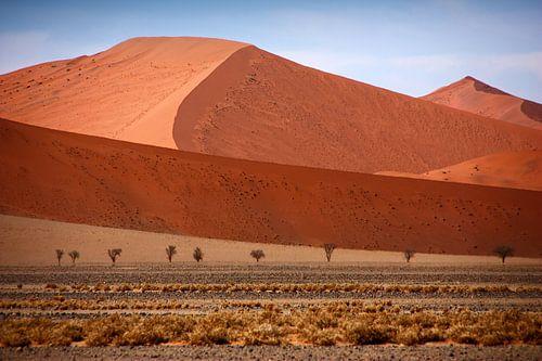 NAMIBIA ... Namib Desert  Dunes II van Meleah Fotografie