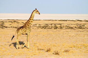 Giraf in de Namib woestijn van Merijn Loch