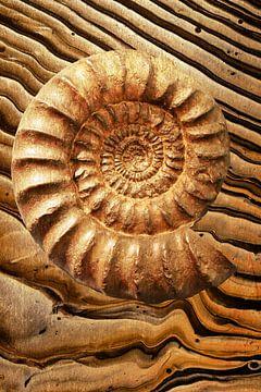 Ammonit von Jacky