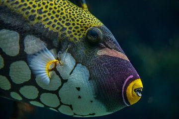 Tropische vis van Ron Meijer