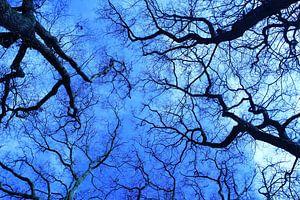 blauwe bomen