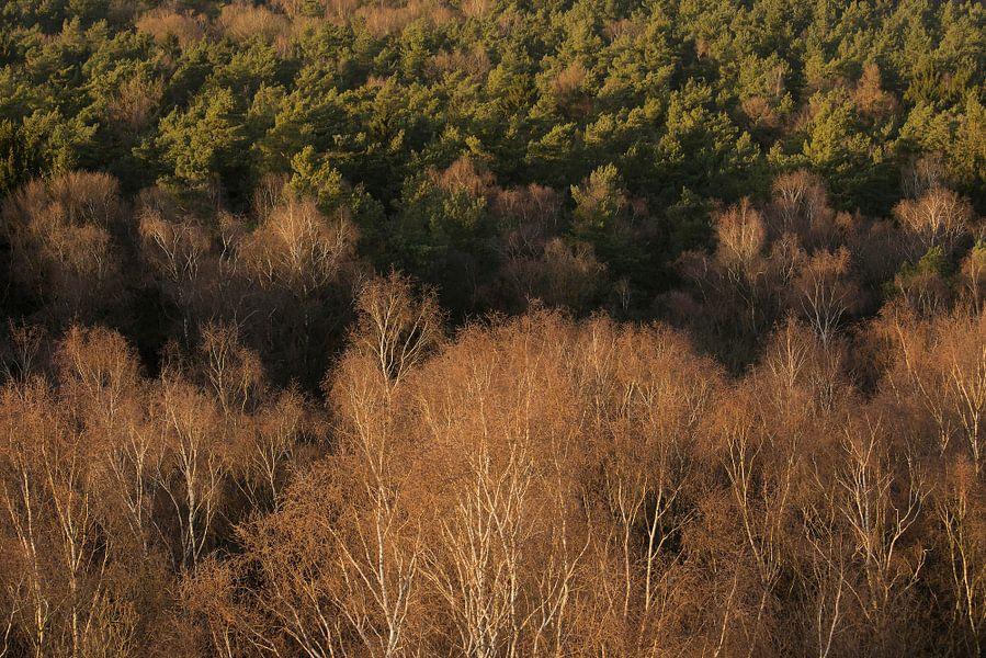 Bergherbos in vogelperspectief van Elroy Spelbos