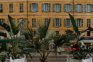palm van Huib Vintges