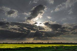 zon door wolkenlucht boven koolzaadveld