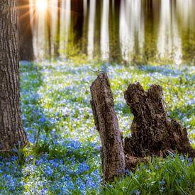Blausternchen  van Tilo Grellmann