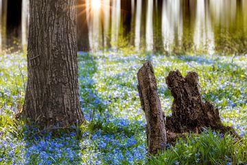 Blauwe ster van Tilo Grellmann | Photography