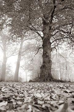 dunkler Baum von eric brouwer