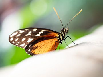 Vlinder van Mariëtte Plat
