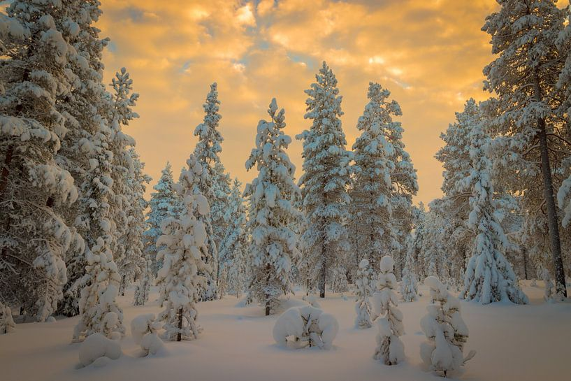 Winter Wonder Dreamland van Bobby Dautzenberg