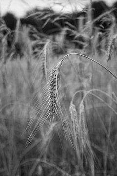 Nahaufnahme von Weizen auf dem Feld von Wouter Kouwenberg