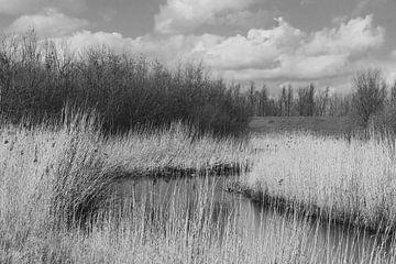 Natuur gebied van Kuifje-fotografie