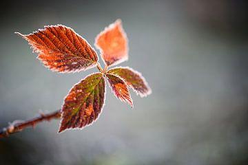 rood schitterend blad van Tania Perneel