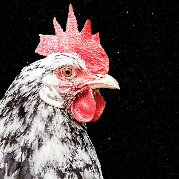 Kukelekuuuuuh van Fotografie Jeronimo