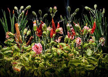 Dianthus aromaticus (Gewürznelke) von Olaf Bruhn