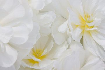 Witte bloemen met een vleugje geel von Michèle Huge