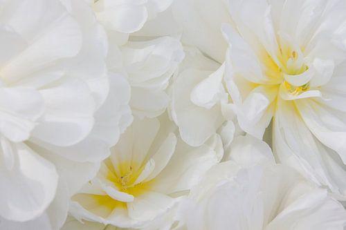 Witte bloemen met een vleugje geel van