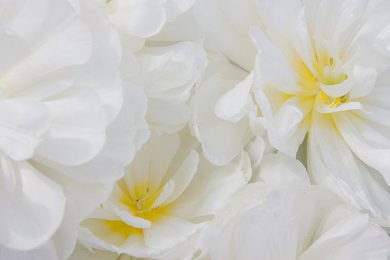 Witte bloemen met een vleugje geel van Michèle Huge