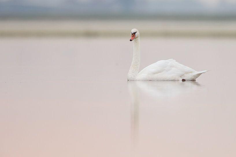 Swan von Menno Schaefer