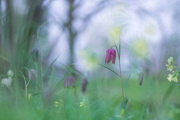 Le printemps est arrivé sur Birgitte Bergman