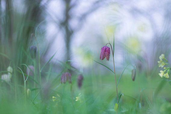Le printemps est arrivé van Birgitte Bergman