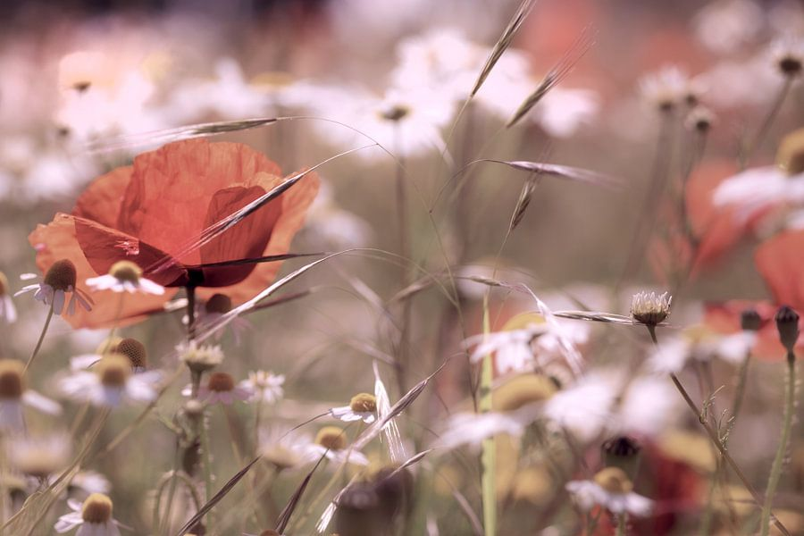 Poppys field to the sunrise van Kurt Krause
