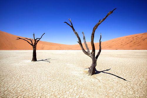 Deadvlei in Sossusvlei, Namibia  van