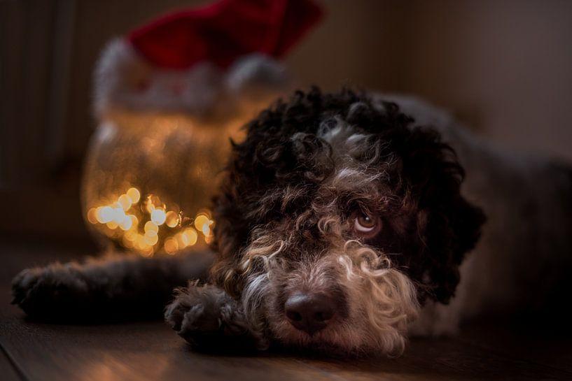 Xmas is gone - kerstmis is voorbij van Desirée Couwenberg