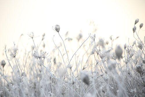 Frozen flowers van